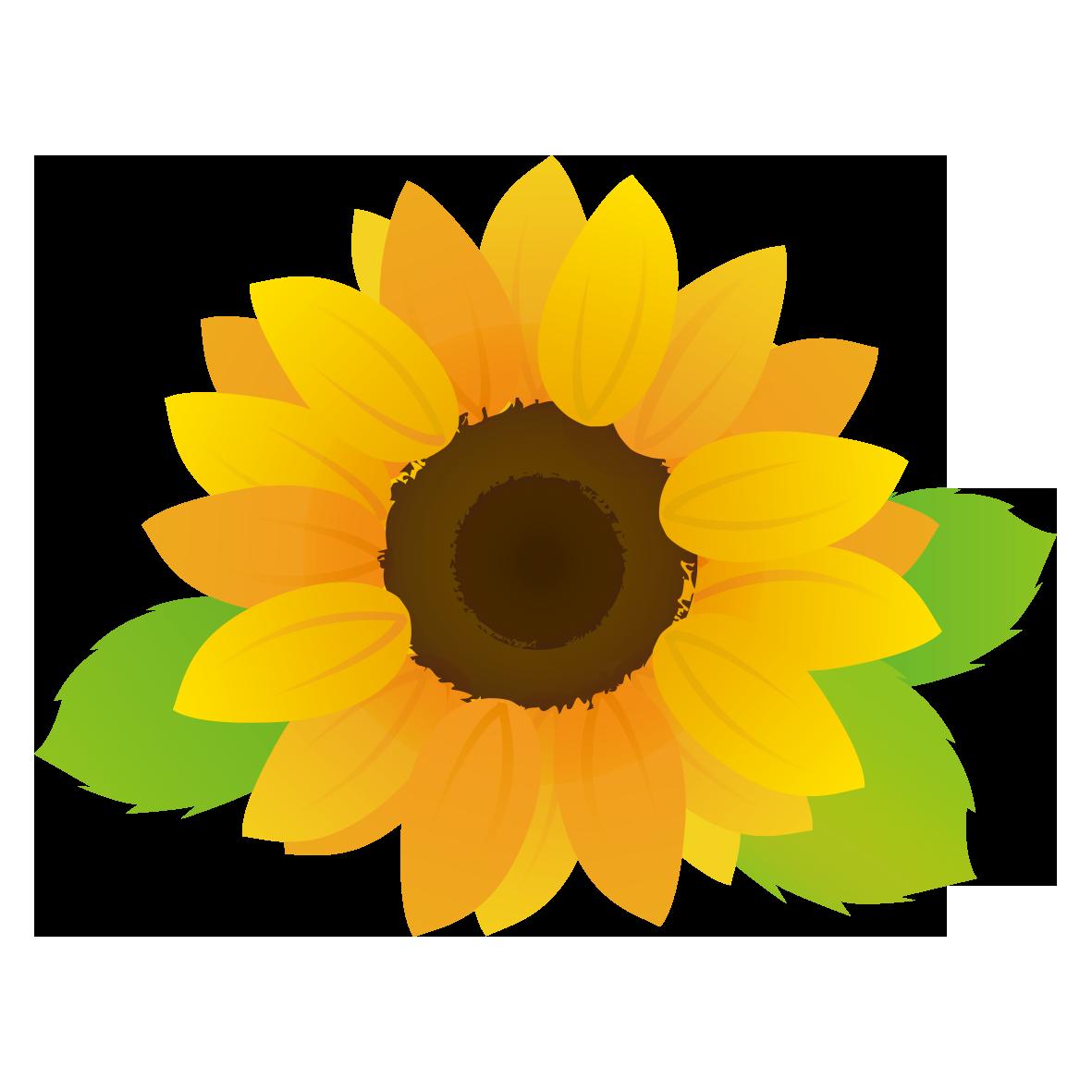 大きなひまわりの花 無料イラスト愛